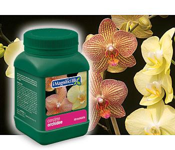 Concimi idrosolubili per acidofile agrumi bonsai for Concime per orchidee